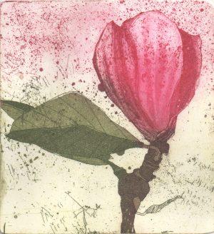 Graphic Studio Dublin •Marta Wakula-Mac: Graphic Studio Dublin: Magnolia VI