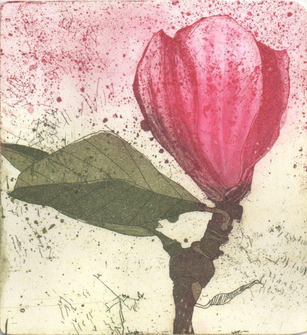 Graphic Studio Dublin: Marta Wakula-Mac, Magnolia VI
