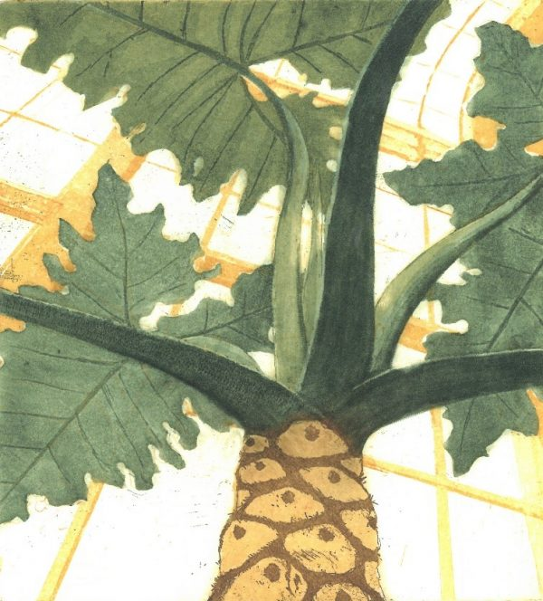 Graphic Studio Dublin: Paul Fitters, Philodendron sp.