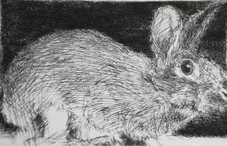 cullen_charles_rabbit