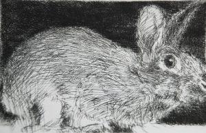 Graphic Studio Dublin •Charles Cullen: Graphic Studio Dublin: Rabbit