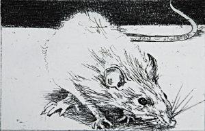 Graphic Studio Dublin •Charles Cullen: Graphic Studio Dublin: Rat