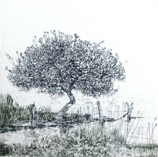 Graphic Studio Dublin: Susan Early, Glencar Tree