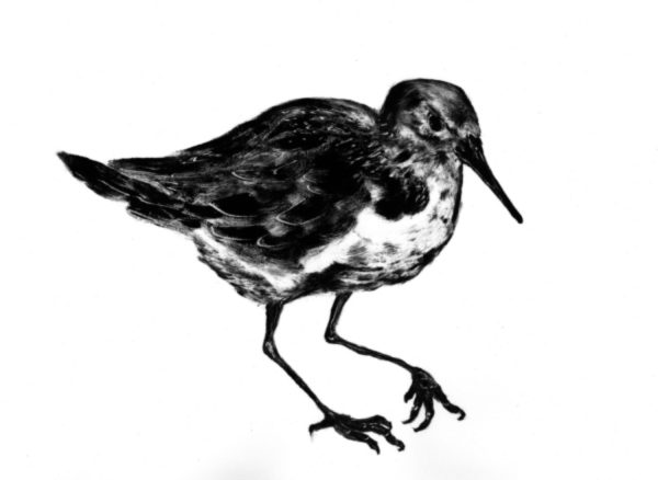 Graphic Studio Dublin: Renate Debrun, Redshank