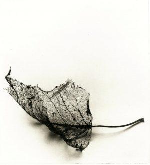 Graphic Studio Dublin: Aisling Dolan, Fallen