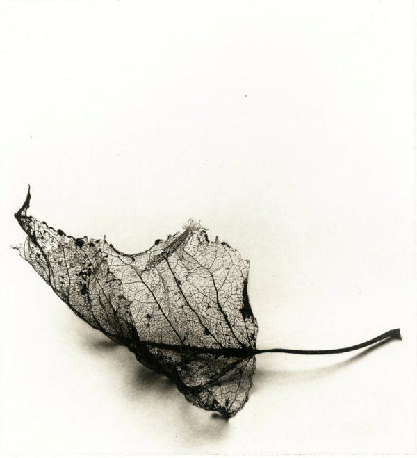 Graphic Studio Dublin: Fallen