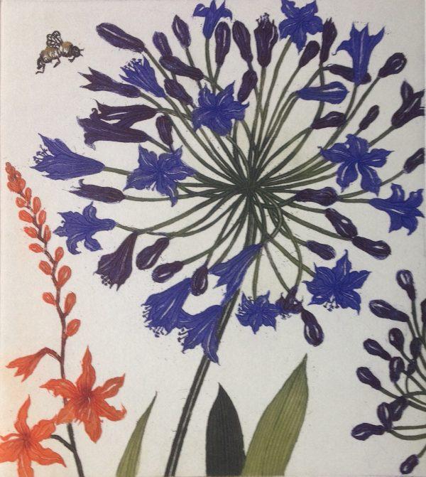 Graphic Studio Dublin: Agapanthus Montbretia and a bee