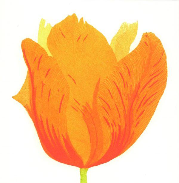 Graphic Studio Dublin: Grainne Cuffe, Blooming