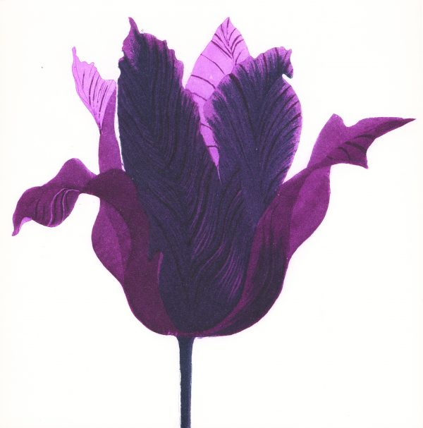 Graphic Studio Dublin: Grainne Cuffe, Tulipa Purpora