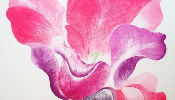 Tulip for Miriam
