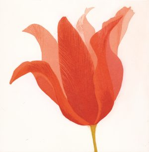 Graphic Studio Dublin • Grainne Cuffe: Graphic Studio Dublin: Blooming, Grainne Cuffe