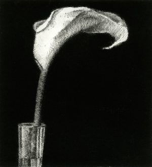 Graphic Studio Dublin •Raphael Hynes: Graphic Studio Dublin: Arum Lily