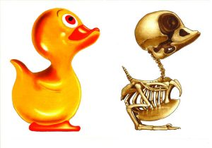 Graphic Studio Dublin: John Kindness, Anatomy of a Rubber Duck