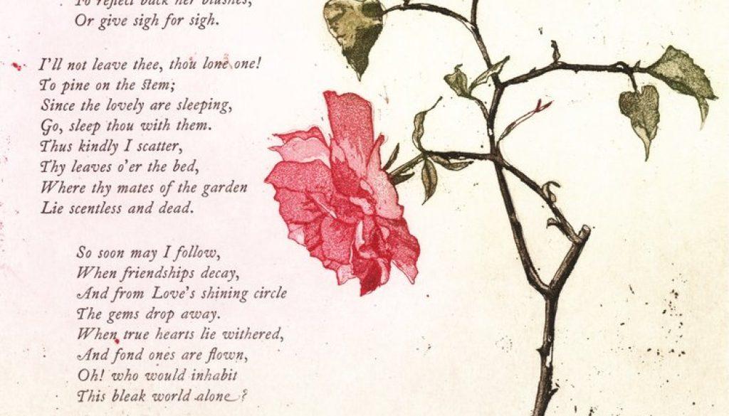 Mary Plunkett, The last rose of summer