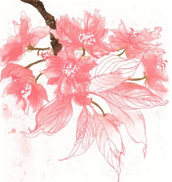 Graphic Studio Dublin: Blossom, Cherry Blossom, Noelle O'Keeffe