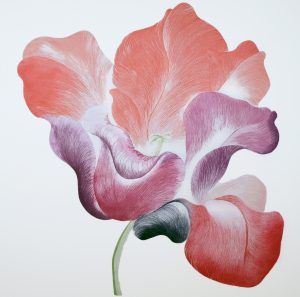 Graphic Studio Dublin • Grainne Cuffe: Graphic Studio Dublin: Tulip for Miriam