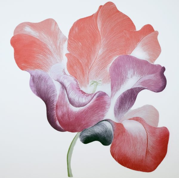 Graphic Studio Dublin: Grainne Cuffe, Tulip for Miriam