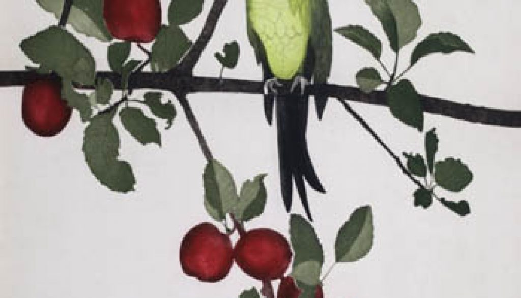 Black Headed Conure, etching, 65 cm x 50 cm, [65 cm x 50 cm], Edition of 40, €550