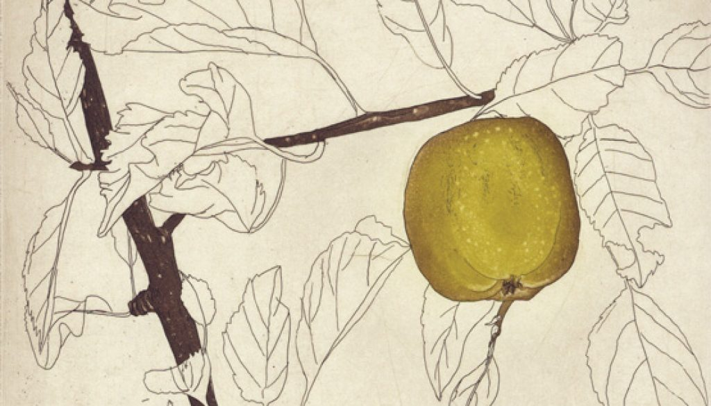 Green Apple etching Edition of 50, €285