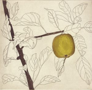 Graphic Studio Dublin • Cliona Doyle: Green Apple etching Edition of 50, €285