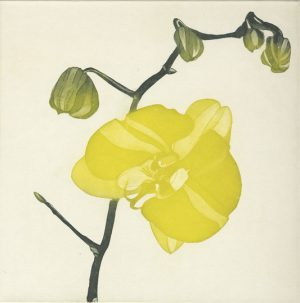 Graphic Studio Dublin • Cliona Doyle: Green Butterfly Orchid etching