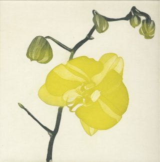 Green Butterfly Orchid etching