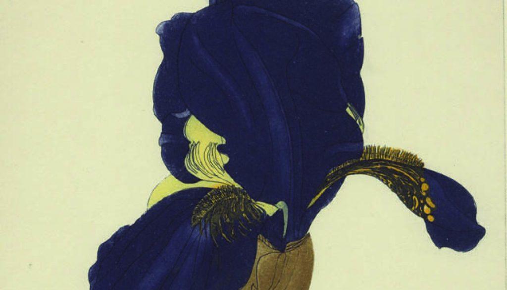 Cliona Doyle, Iris Marechal Ney