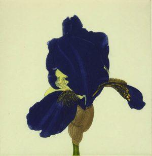 Graphic Studio Dublin •Cliona Doyle: Iris Marechal Ney