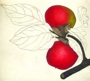Graphic Studio Dublin • Cliona Doyle: Cliona Doyle Japanese Persimmon, etching, Edition of 50, €285