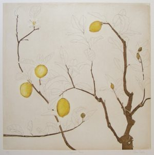 Graphic Studio Dublin • Cliona Doyle: Cliona Doyle Lemons, etching, Edition of 50, €740
