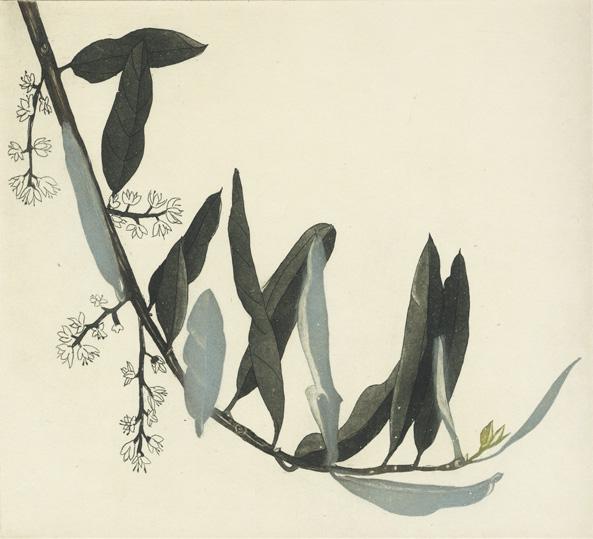 Cliona Doyle, Olive Branch II