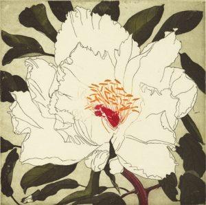 Graphic Studio Dublin •Cliona Doyle: Paeonia Fen Dan Bai