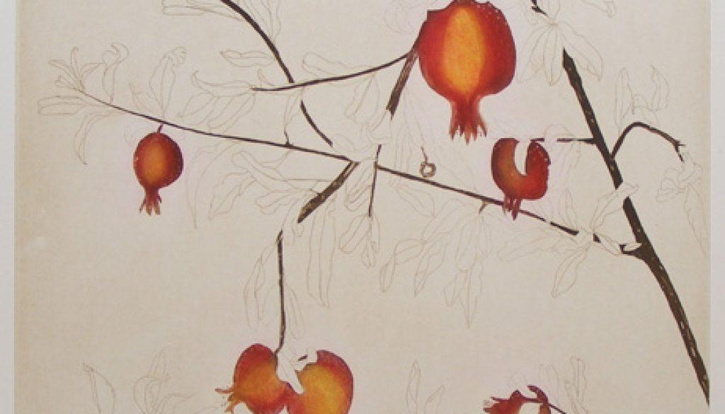 Cliona Doyle, Pomegranate Tree, etching, Edition of 50, €740