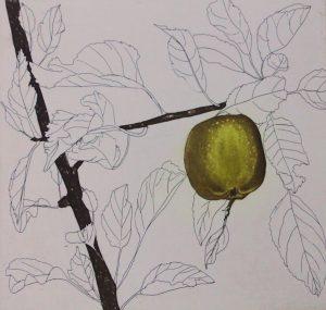 Graphic Studio Dublin •Cliona Doyle: Graphic Studio Dublin: Green Apple