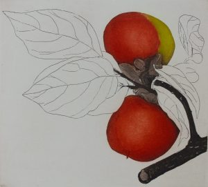 Graphic Studio Dublin • Cliona Doyle: Graphic Studio Dublin: Japanese Persimmon