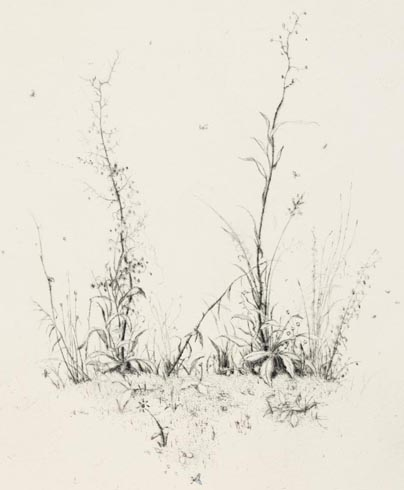 All the Plants, drypoint, 47cm x 32cm [18.5cm x 15cm], Edition of 40, €200