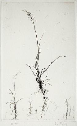 Graphic Studio Dublin •Lars Nyberg: Buds