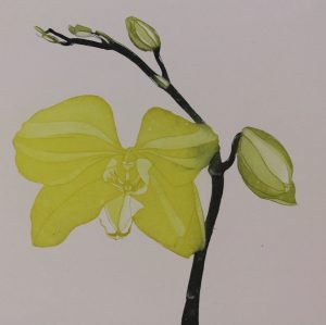 Graphic Studio Dublin • Cliona Doyle: Graphic Studio Dublin: Green Butterfly Orchid