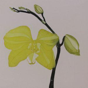 Graphic Studio Dublin •Cliona Doyle: Graphic Studio Dublin: Green Butterfly Orchid