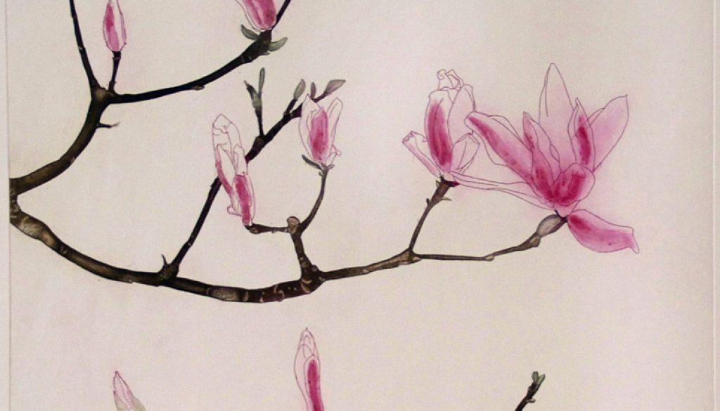 Cliona Doyle, Magnolia