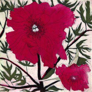 Graphic Studio Dublin •Cliona Doyle: Paeony I