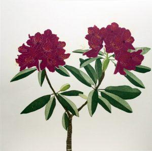 Graphic Studio Dublin •Cliona Doyle: Rhododendron
