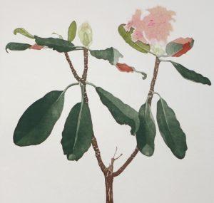 Graphic Studio Dublin •Cliona Doyle: Rhododendron Falconeri