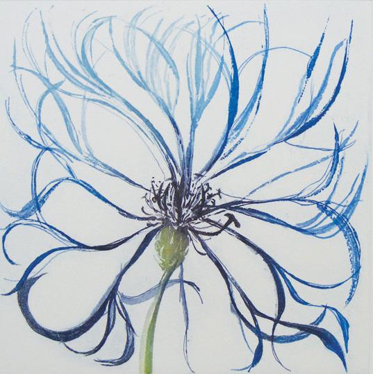 Grainne Cuffe, Centaurea Montana II