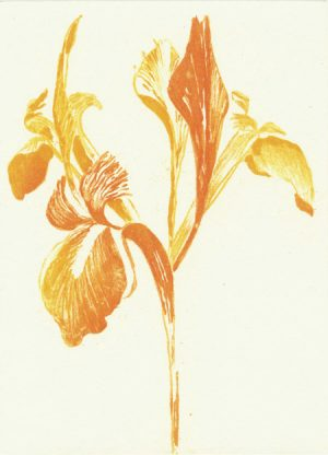 Graphic Studio Dublin • Grainne Cuffe: Golden Iris