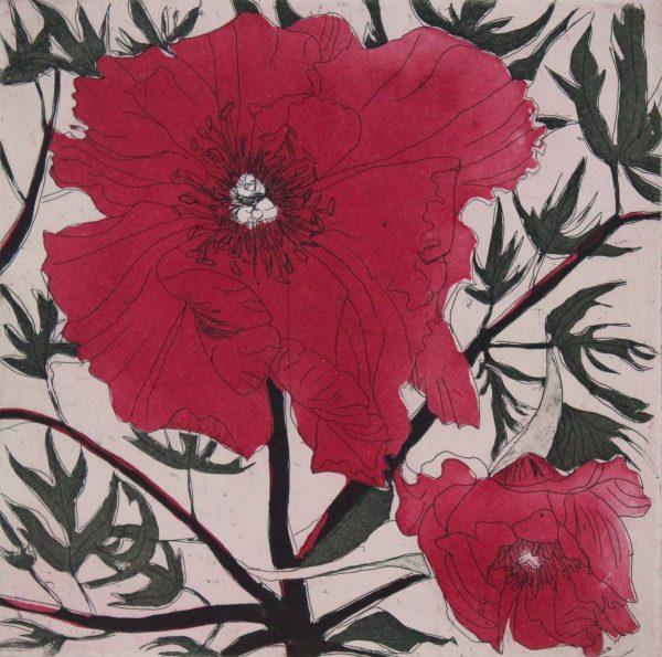 Graphic Studio Dublin: Cliona Doyle, Paeony I