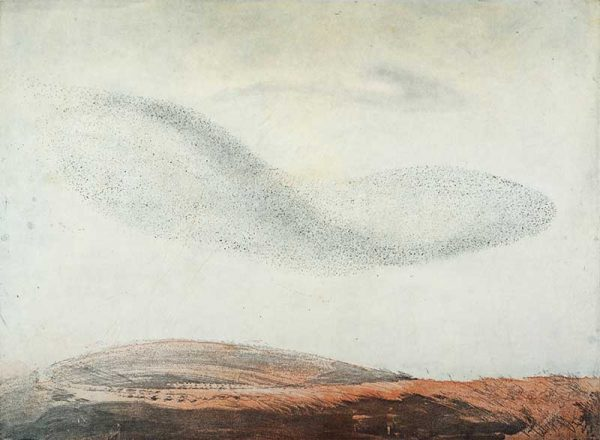 Vincent Sheridan Murmuration II Edition of 40 €600 Etching Size: 45cm x 61cm 2015