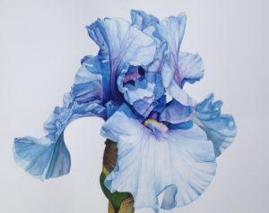 Graphic Studio Dublin •Nicola Lynch Morrin: Watercolour, Nicola Lynch Morrin