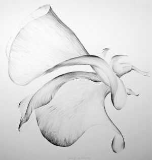 Sweet Scented III, Graphite on Sommerset, 106 x 102 cm, Graphite on Sommerset, 106 x 102 cm, € 1755 framed price
