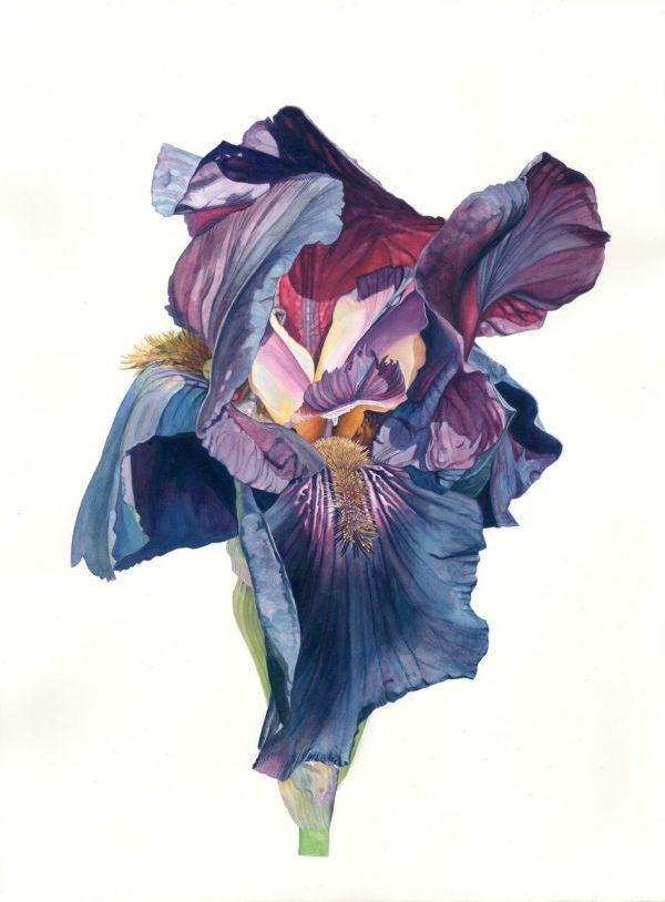 Graphic Studio Dublin: Nicola Lynch Morrin, All that's best of bright and dark